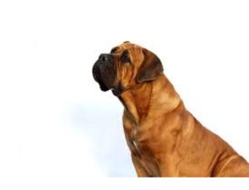 Hvad er det bedste hundefoder til Jagthunde?